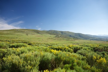 meadows in Gredos natural park