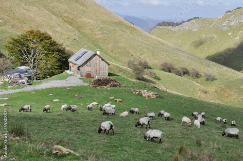 Flock of sheep at Pyrenees, border between Spain and France