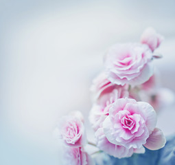 Roses in vintage style/Pink flower background
