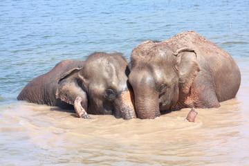 Elephant relationship