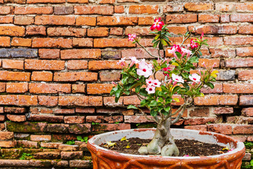 Pink flower against the ancient brick wall