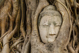 Buddha head in old tree close up