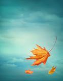 Fototapety Autumn falling leaves