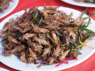 Dish of fried insects