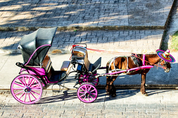 Carrozza trainata da cavallo con sombrero