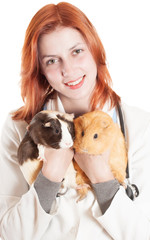 woman veterinarian holding a two guinea pigs