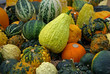 Small pumpkins and gourds in fall.