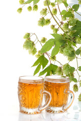 Two glasses of beer and hop plant