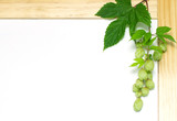 branch of hops on a white background, in a wooden frame