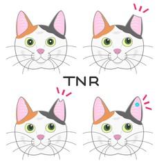 耳カット、TNR運動