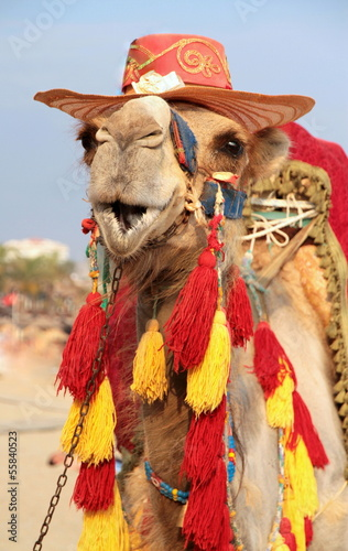 Foto op Canvas Kameel Fancy touristic camel