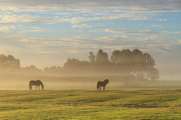 Horses in a foggy meadow.