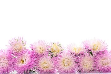 aster bouquet