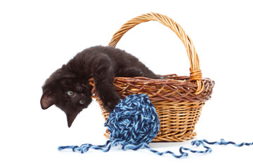 kitten inside of basket playing with yarn