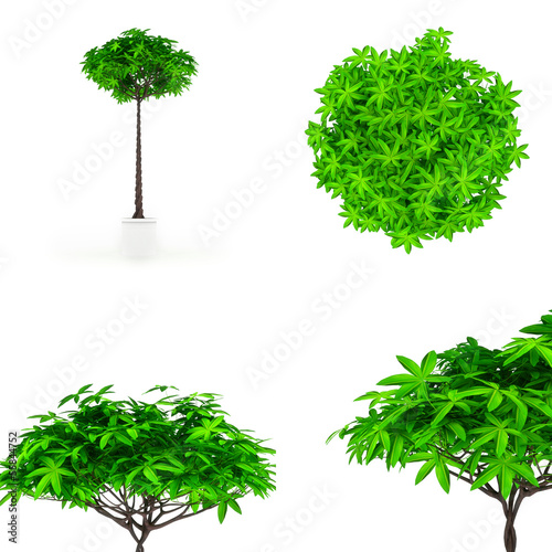Houseplant isolated on white render