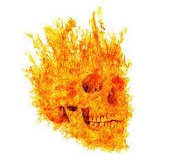 skull in flame on white background