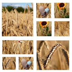 Getreide Collage