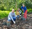 family harvesting potatoes in field