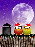 Owls at Christmas
