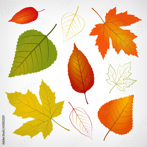 Autumn vector leaf