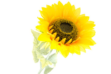 The sunflower with stem