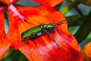 green beetle on a flower