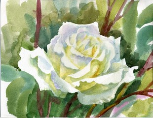 Watercolor Flower Collection: white rose