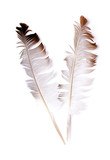 abstract bird feather on white background