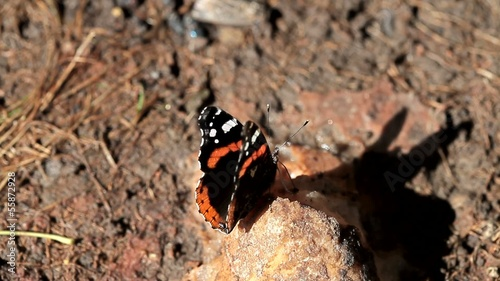 Beautiful butterfly eat mineral