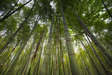 Bamboo forest in Hangzhou, China