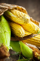 Fresh Sweet Corn on the wooden table, selective focus