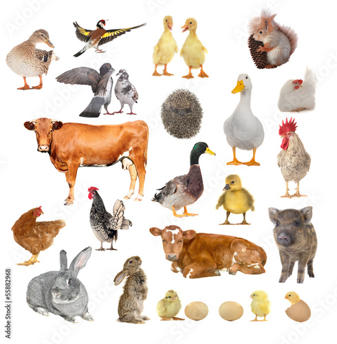 Foto op Canvas Kip animals