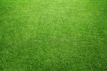 Perfect green grass at the sport field or back yard