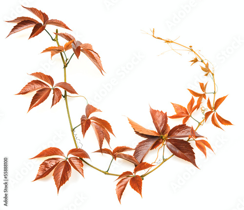 autumn branch on a white background