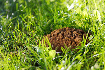 Molehill on the grass