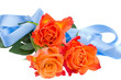three orange roses with blue bow