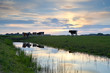 cattle on pasture at sunset