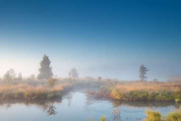 morning sunshine over misty swamp