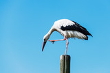 stork standing on wooden pole