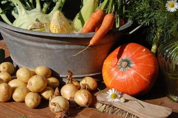 frisches Gemüse vom Feld