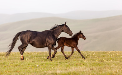 Mare and foal running on the background of mountains