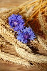 Kornblume und Getreide