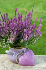 Violettes Heidekraut