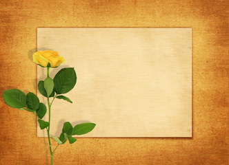 Old blank card with a single yellow rose