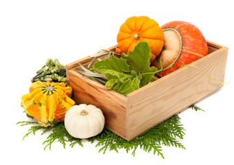 Pumpkin with green leaves in a wooden box