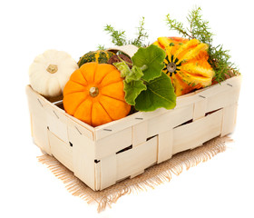 Ripe colorful pumpkins in a basket
