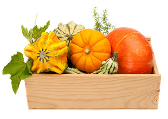 Ripe pumpkin with green leaves in a wooden box