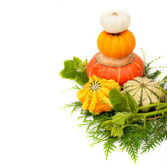Colorful pumpkins with green leaves on a white background