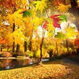 Wonderful day in autumn with colorful falling leaves