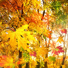 Wonderful day in autumn / falling leaves